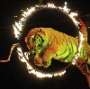Цирки в Перми